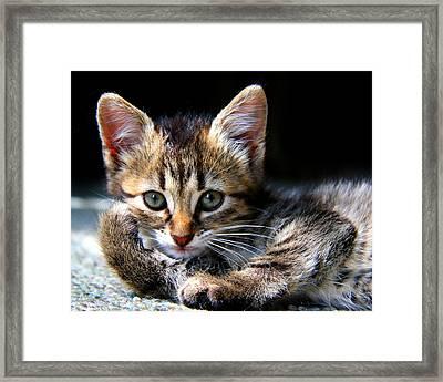 Posing Kitty Framed Print by Joe Myeress