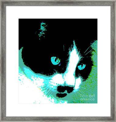 Poster Kitty Framed Print