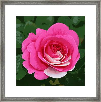 Poster Rose Framed Print by Jim Speirs