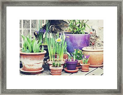 Pot Plants Framed Print by Lespetitsriens