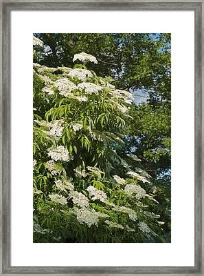 Potchen's Cascade Framed Print