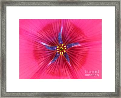 Potential Photography Framed Print by Tina Marie