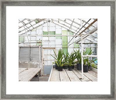 Potted Plants In A Greenhouse Framed Print by Thom Gourley/Flatbread Images, LLC