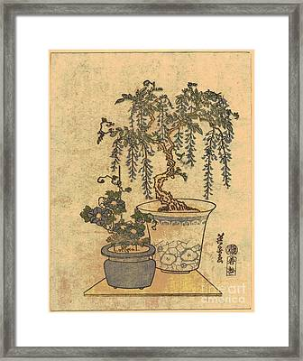 Potted Wisteria Framed Print by Padre Art