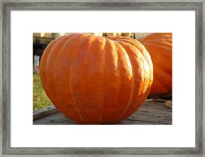Pounds Of Pumpkin  Fun Framed Print by LeeAnn McLaneGoetz McLaneGoetzStudioLLCcom