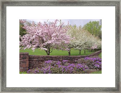 Powder Hill Blossoms Framed Print