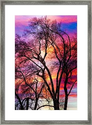 Powerful Trees Framed Print by James BO  Insogna