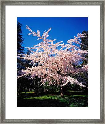 Powerscourt Gardens, Powerscourt Framed Print by The Irish Image Collection