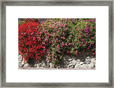 pr 356 Wallflowers Framed Print by Chris Berry