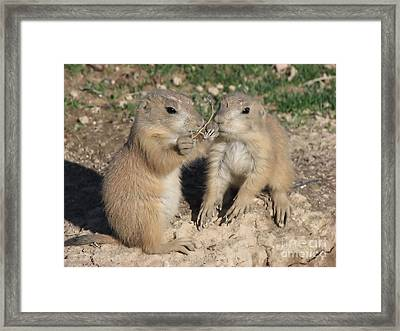 Prairie Dog Duo Framed Print by Michelle H