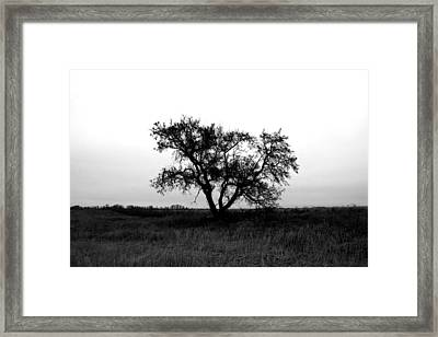 Prairie Dog Framed Print by Empty Wall
