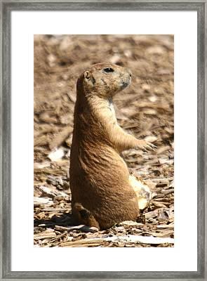 Prairie Dog Profile Framed Print by Western Roundup
