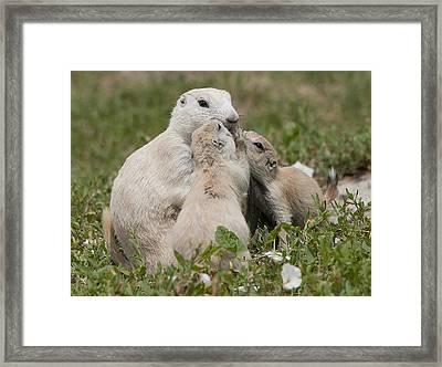 Prairie Kiss Framed Print by Wade Aiken