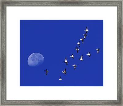 Prairie Migration Framed Print by Tony Beck