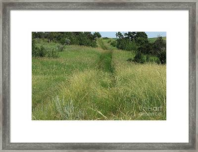 Prairie Trail In High Grass Framed Print by Jim Sauchyn