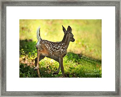 Framed Print featuring the photograph Prancing Fawn by Nava Thompson