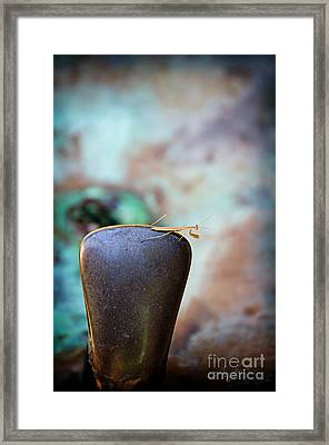 Praying For Water 1 Framed Print by Andee Design