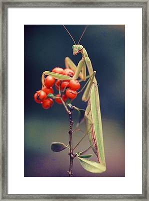 Praying Mantis Framed Print by Alfredo Da Silva