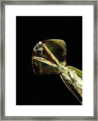 Praying Mantis Framed Print by Volker Steger