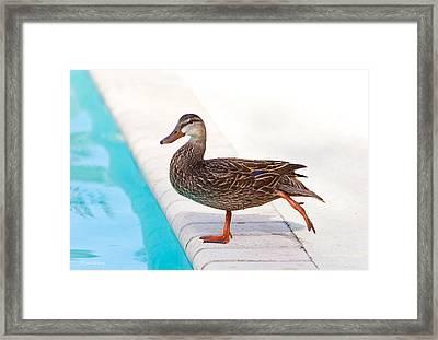Pre Swim Stretch Framed Print by Michelle Wiarda