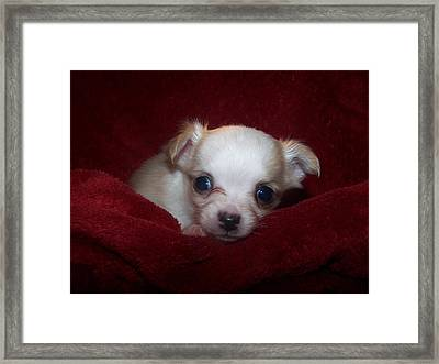 Precious Framed Print by Christy Leigh