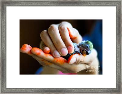 Precious Life Framed Print by Syed Aqueel