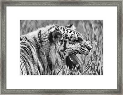 Predator Framed Print by Naman Imagery