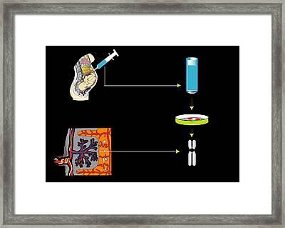 Prenatal Screening, Artwork Framed Print by Francis Leroy, Biocosmos