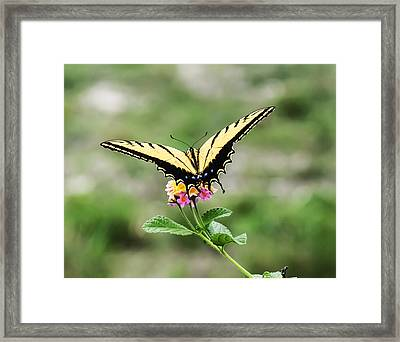 Prepare For Take Off Framed Print by Kelly Rader