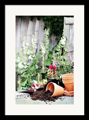 Floral Supply Framed Prints