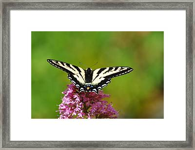 Framed Print featuring the photograph Preparing For Take-off by Ronda Broatch