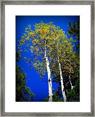 Prescott Fall Aspen Canopies Framed Print