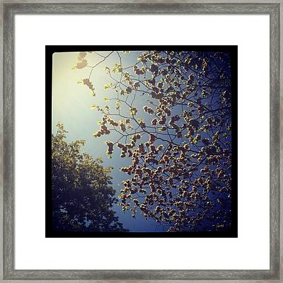 Present Framed Print by Mariama Rafetna