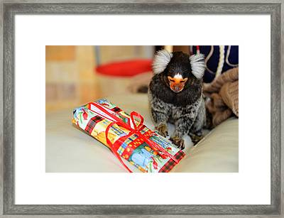Present Time Chewy The Marmoset Framed Print by Barry R Jones Jr