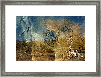 Framed Print featuring the photograph Preservation by Vicki Pelham