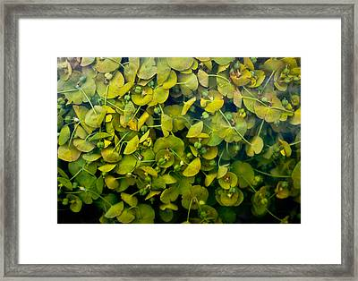 Pressing Framed Print
