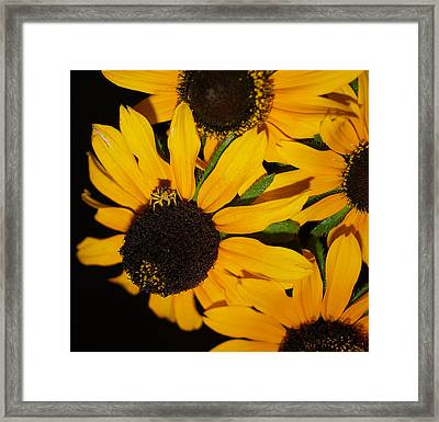 Pretend I'm A Flower Framed Print by Irma BACKELANT GALLERIES