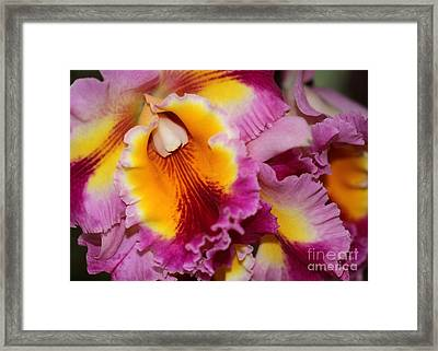 Pretty And Colorful Orchids Framed Print by Sabrina L Ryan