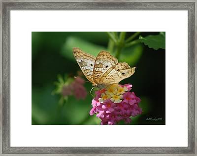 Pretty As A Peacock Framed Print