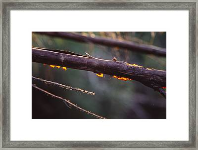 Pretty Bark Framed Print by Bob Whitt