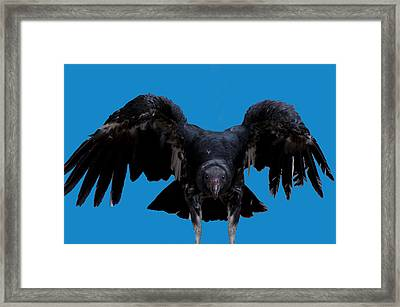 Pretty Bird Not Framed Print