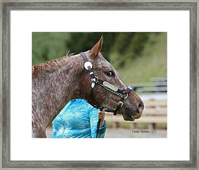 Framed Print featuring the photograph Pretty Boy by Denise Romano