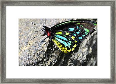 Pretty Colors Framed Print by Kathleen Struckle