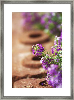 Pretty Flowers Framed Print by Patty Malajak