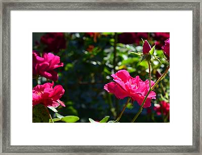 Pretty In Pink Framed Print by Chandra Wesson