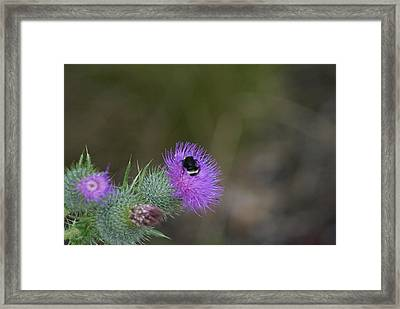Framed Print featuring the photograph Pretty In Pink by Jerry Cahill