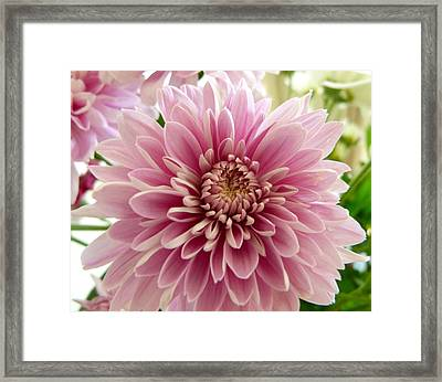 Pretty In Pink Framed Print by Karen Grist