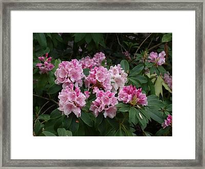 Pretty In Pink Framed Print by Larry Krussel