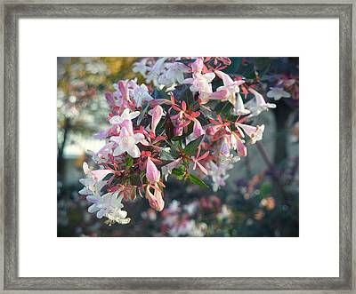 Pretty In Pink Framed Print by Lee Yang