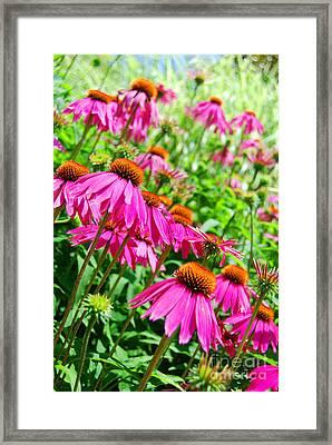 Pretty In Pink Framed Print by Linda Mesibov